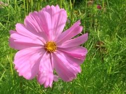fleur toff