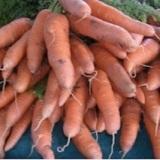 carotte de colmar-a-coeur-rouge