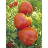 tomate petit coeur de boeuf
