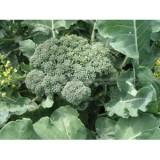 brocolis vert calabrais