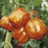 tomate striped stuffer